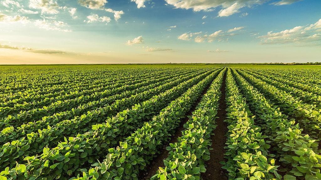 Transformação Digital em ambiente Agrícola